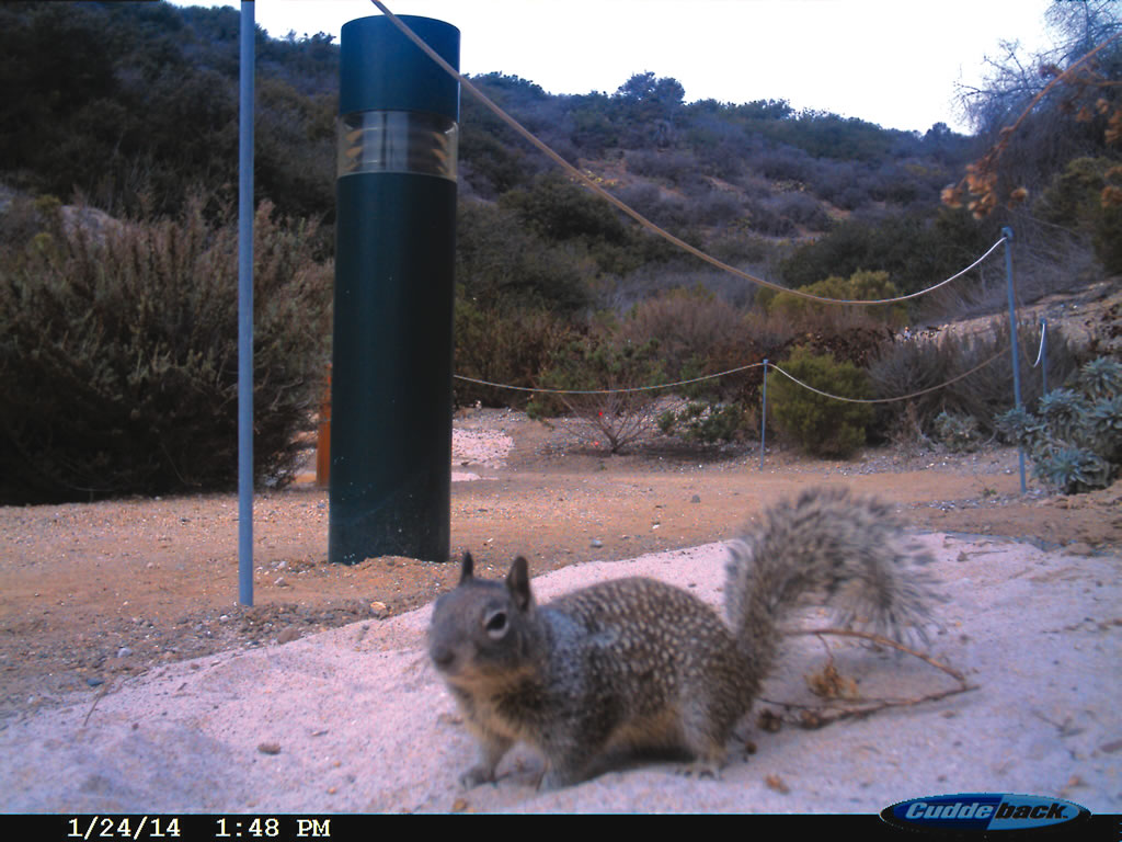 Motion-sensor trap cameras track animals and help citizen scientists learn more about the natural habitat.