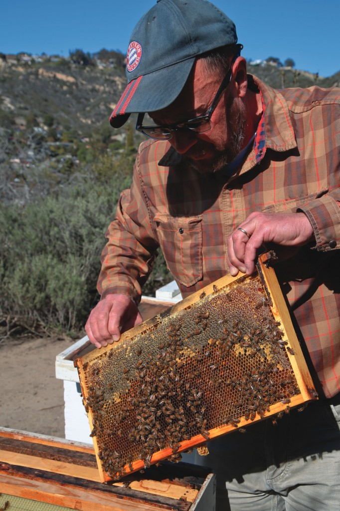 The farm is home to an apiary that houses nine beehives.