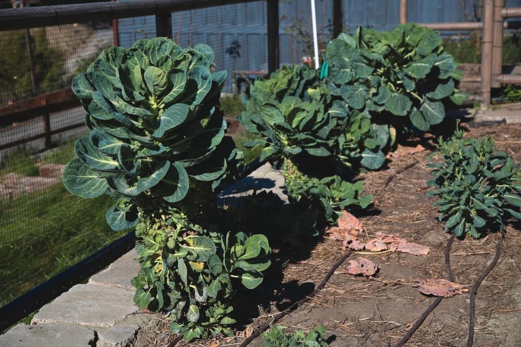 A 1-acre garden on the farm grows seasonal produce.